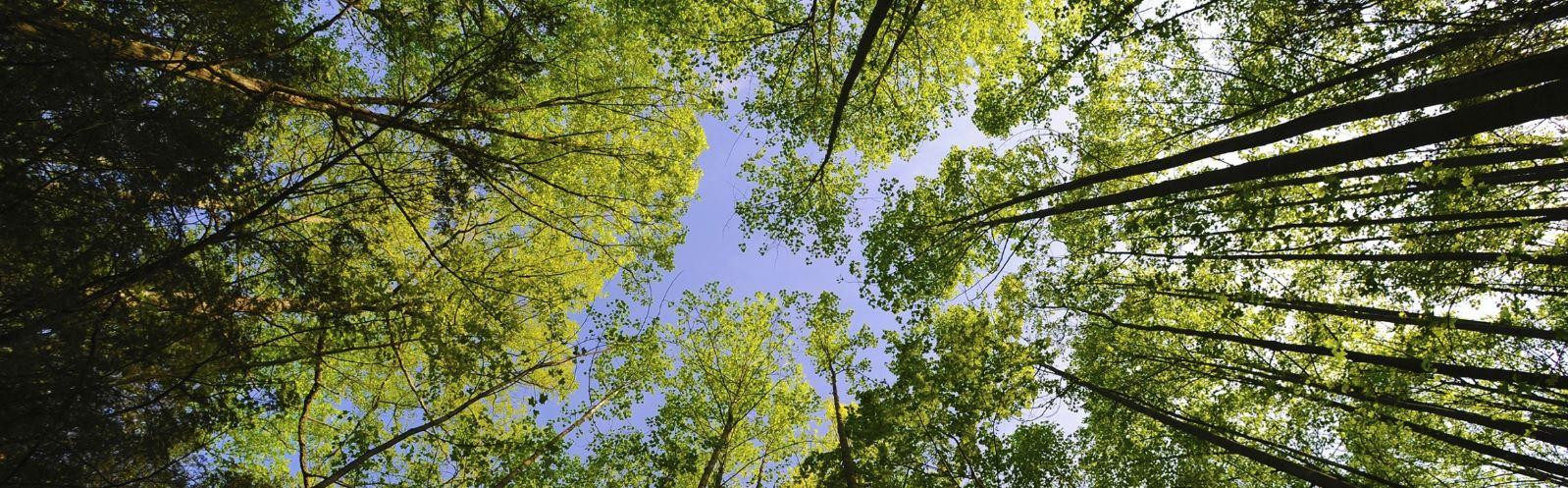 bomen-voor-papier